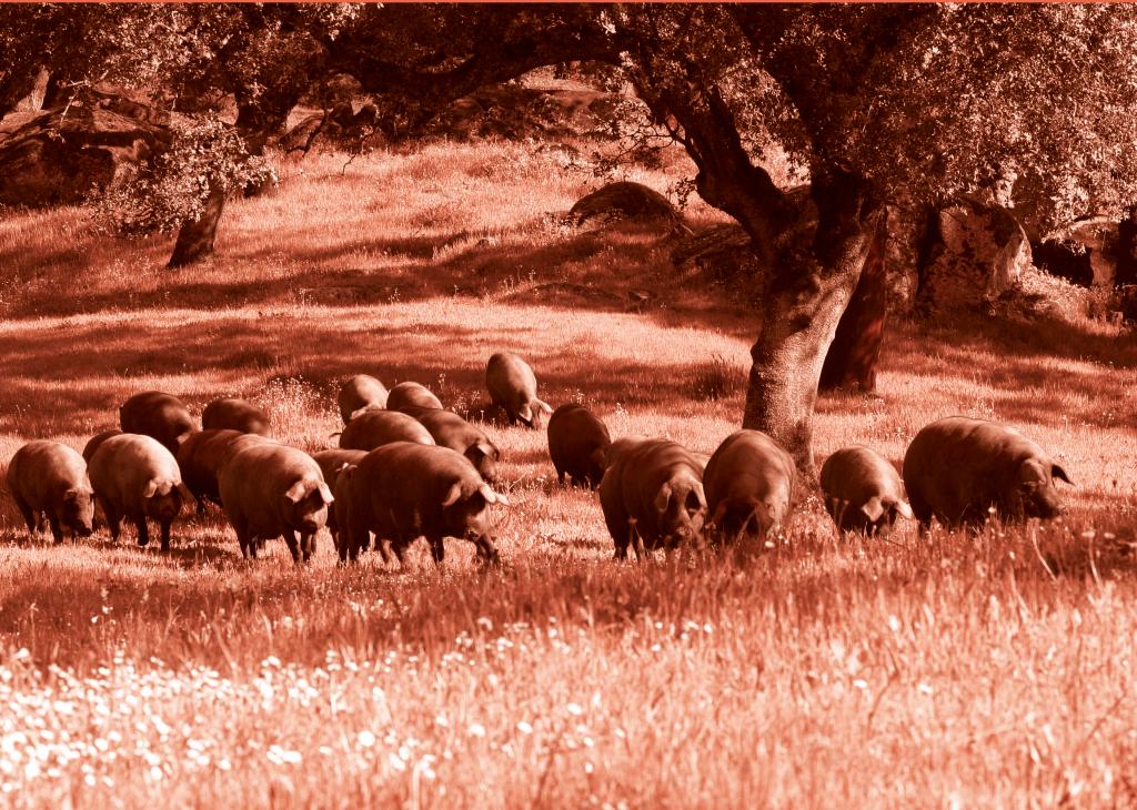dehesa de cerdos